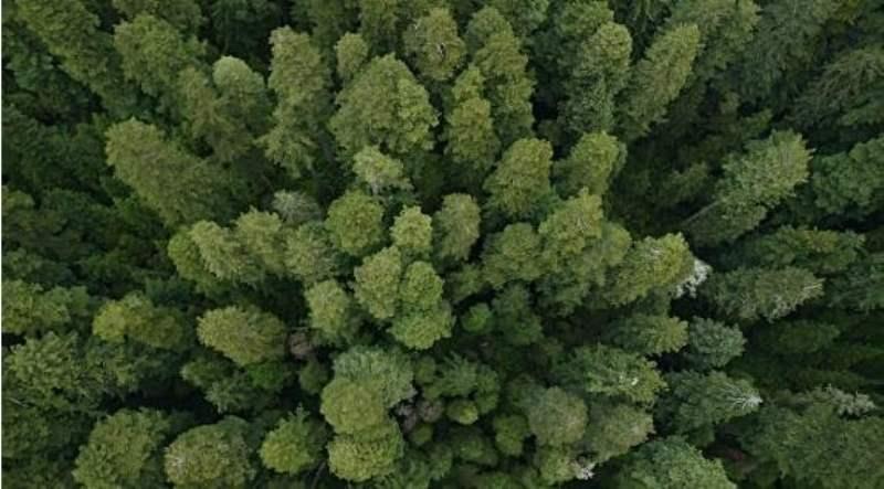 《红木国家公园简介》