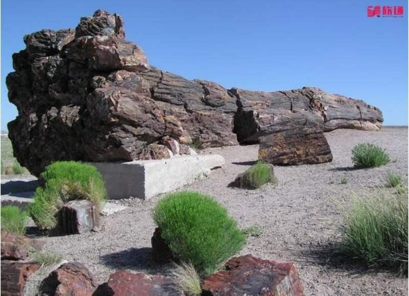 《石化森林国家公园的游客中心和景点介绍》