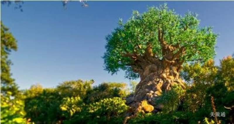 《迪士尼动物王国有什么好玩的》
