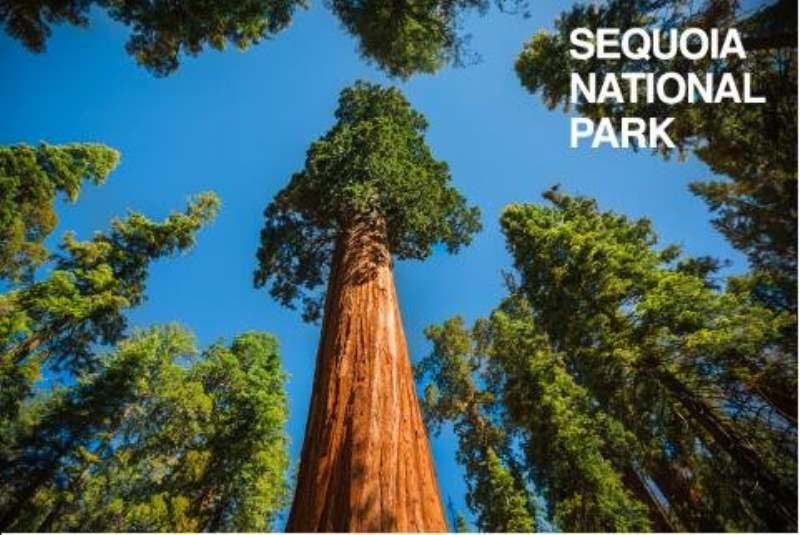 《红杉和国王峡谷国家公园的概况》