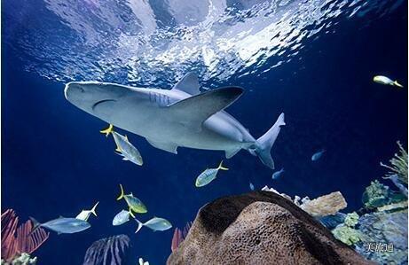 《芝加哥谢德水族馆攻略美国旅游攻略组成员 美国旅游攻略》