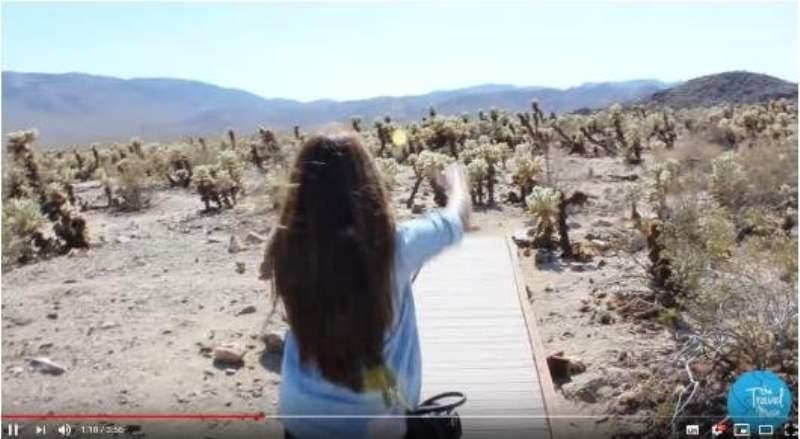 《约书亚树国家公园的视频》