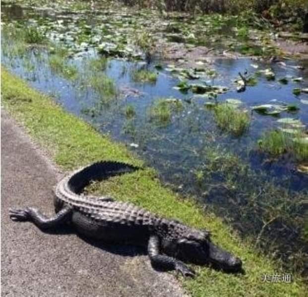 《大沼泽地国家公园有什么好玩的》