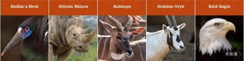 《动物园有什么动物》
