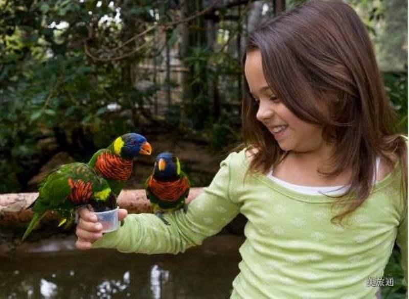 《动物园的免费项目》