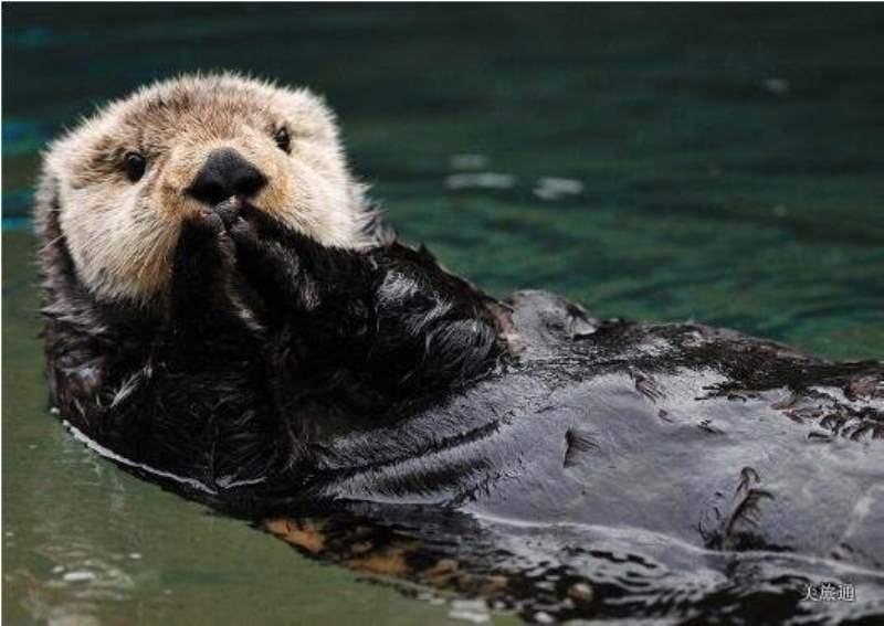 《基奈峡湾国家公园怎么玩》