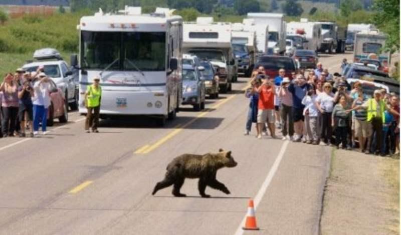 《关于黄石公园的熊》