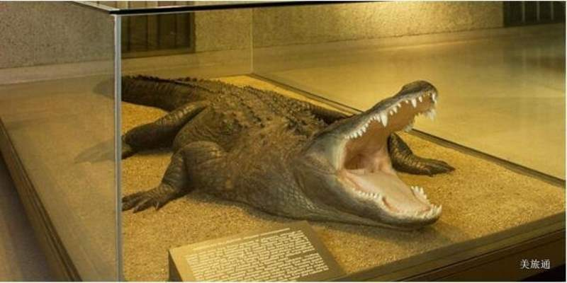《纽约自然历史博物馆的常设展有什么?》