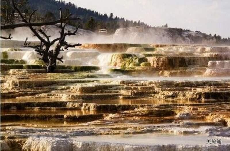 《Mammoth Hot Springs Area 猛犸温泉区》