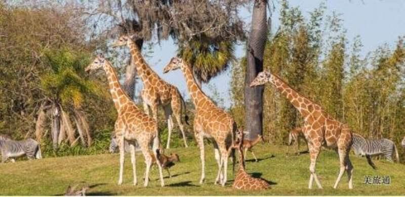 《Busch Gardens的动物》