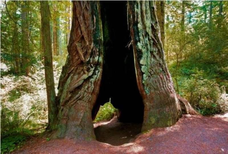 《红木国家公园怎么玩》