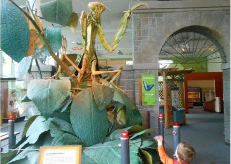 《西雅图太平洋科学馆内有什么》