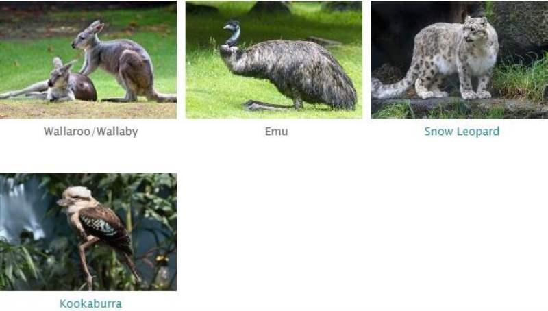 《林地动物园有什么动物》