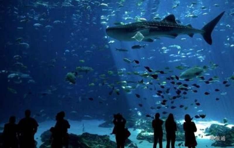 《亚特兰大水族馆内有什么》
