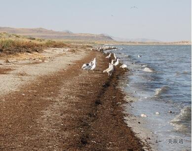 《羚羊岛与大盐湖攻略美国旅游攻略组成员 美国旅游攻略》