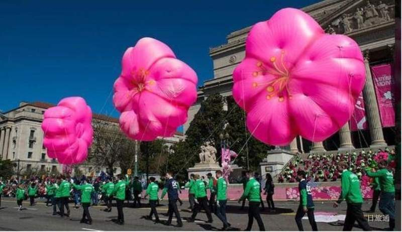 Q. 华盛顿的樱花节是什么?什么时候开始?